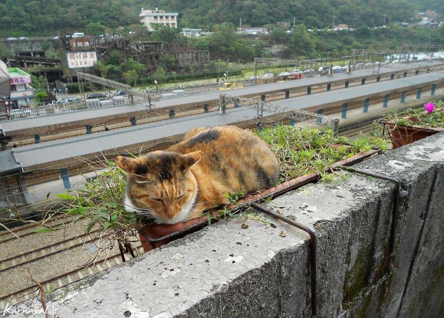 سرگذشت شهری که به دست گربه ها تسخیر شد