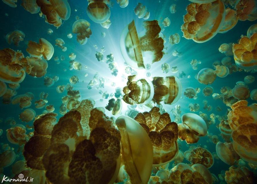 جزیره عروس های دریایی