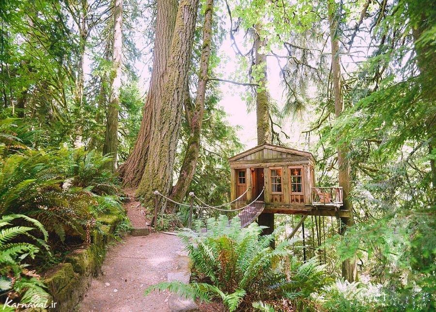 اقامتگاه خانه های درختی ، آرامشی از جنس طبیعت