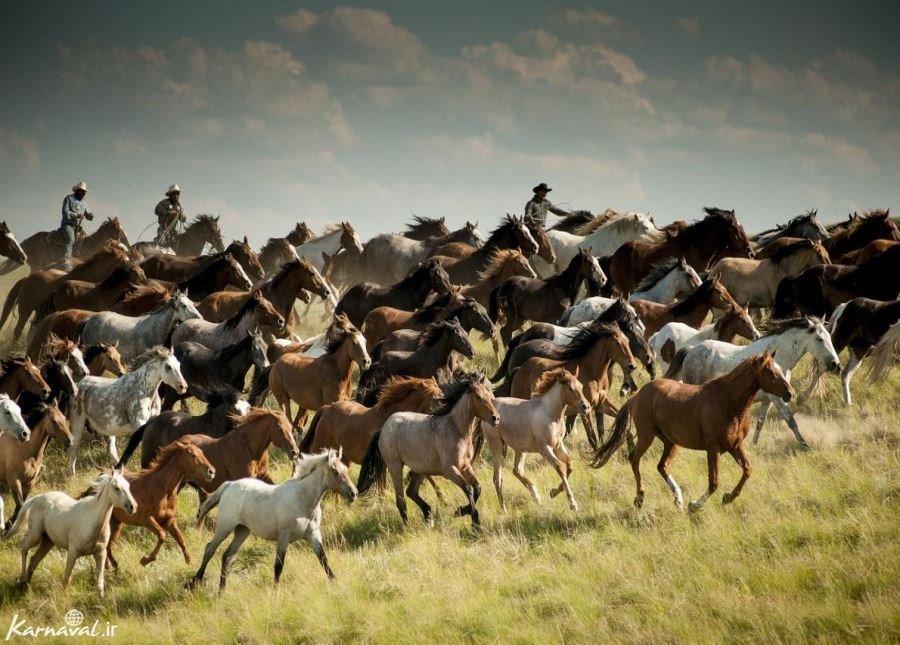 سفری تصویری به ایالت مونتانا , آمریکا ; محو زیبایی شوید