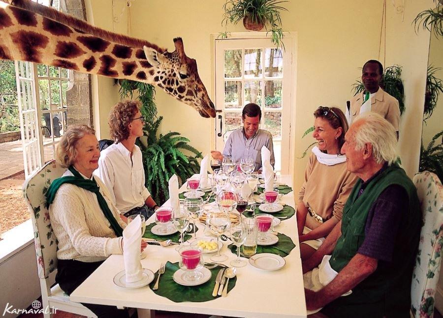هتل مانور زرافه کنیا