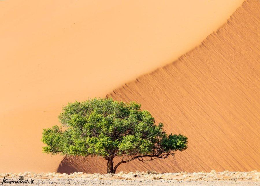 پارک ملی نامیب ناکلافت