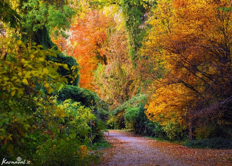 باغ گیاهشناسی تاشکند