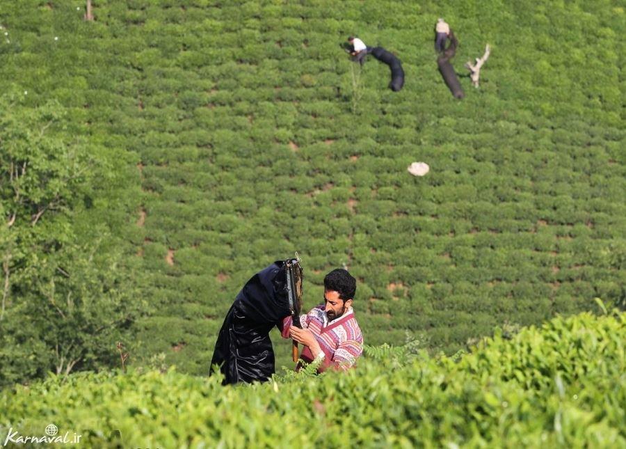 تصاویری از زنان و مردان گیلک هنگام برداشت چای لاهیجان