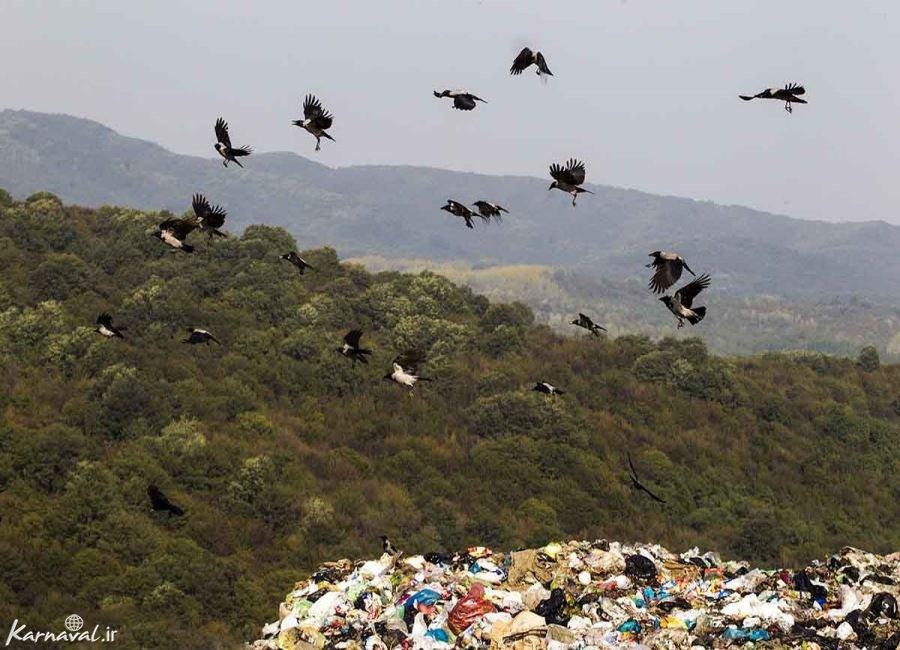 تصاویری از انباشت زباله در جنگل های سراوان
