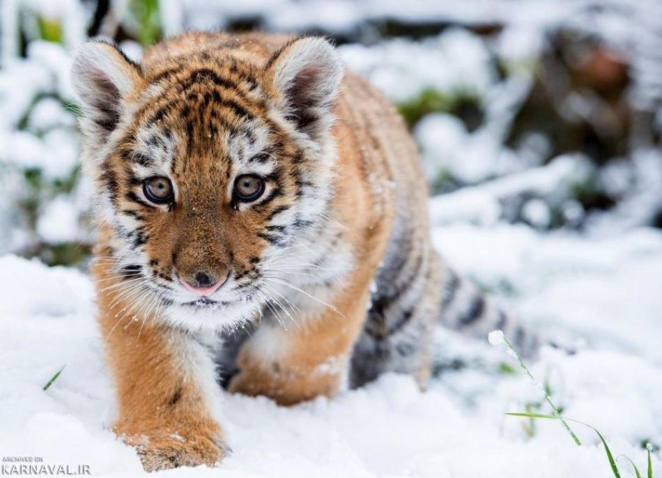 تصاویری از دنیای حیات وحش
