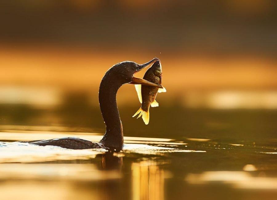پرنده سحرخیز