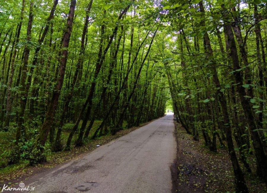 تصاویر جنگل و ساحل گیسوم