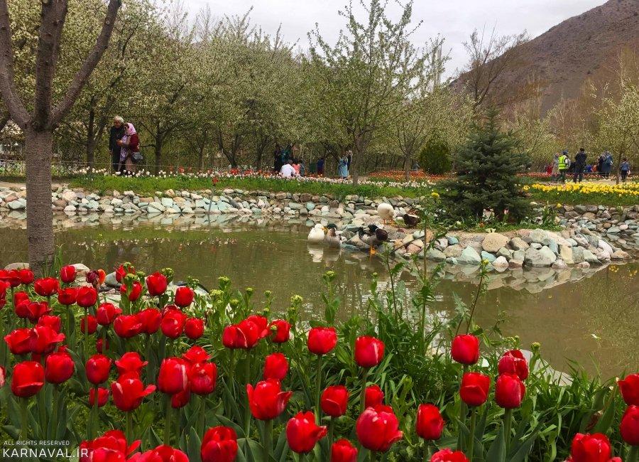 تصاویر باغ لاله های گچسر