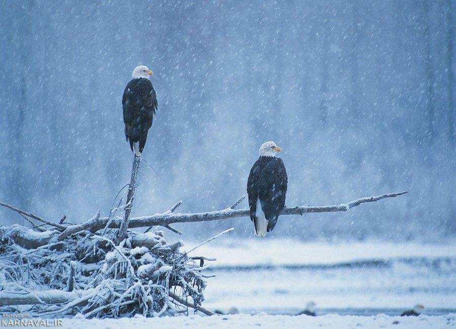 تصاویری از جنوب شرقی آلاسکا
