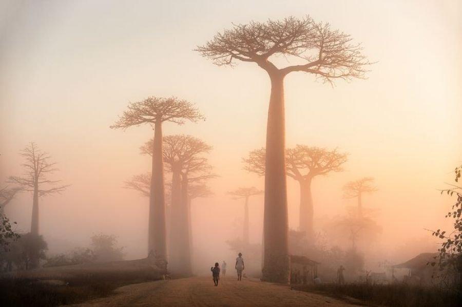خیابان درختان بائوب