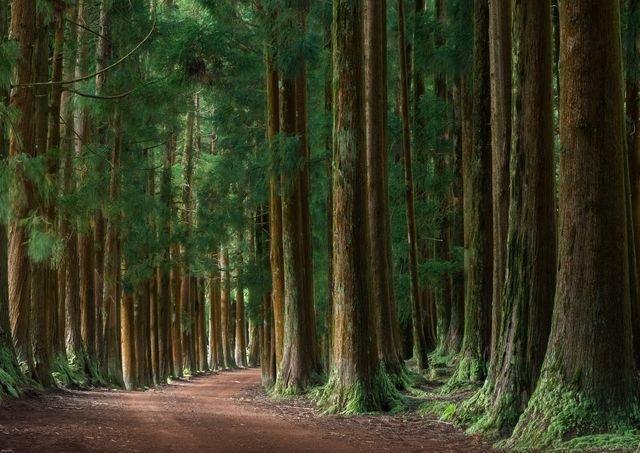 جنگل آرام