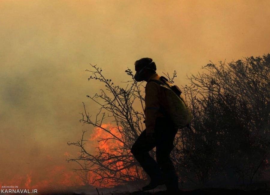 آتش در گلستان به قیمت مرگ هزاران جاندار کوچک