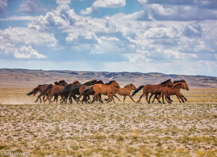 تصاویری از مغولستان