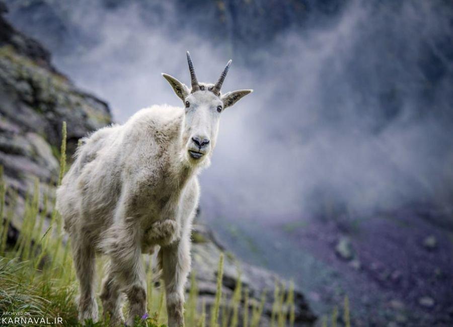 تصاویری از حیات وحش ایالت نوادا