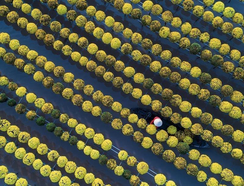 مزرعه گل ها