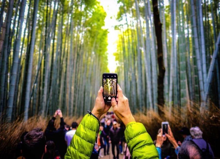 در میان درختان بامبو