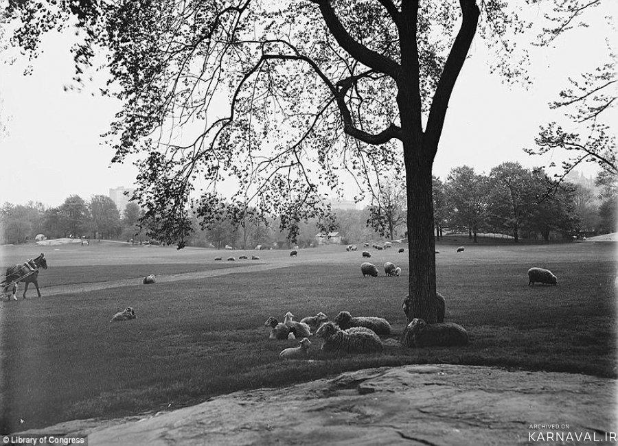 تصاویر تاریخی از سنترال پارک نیویورک