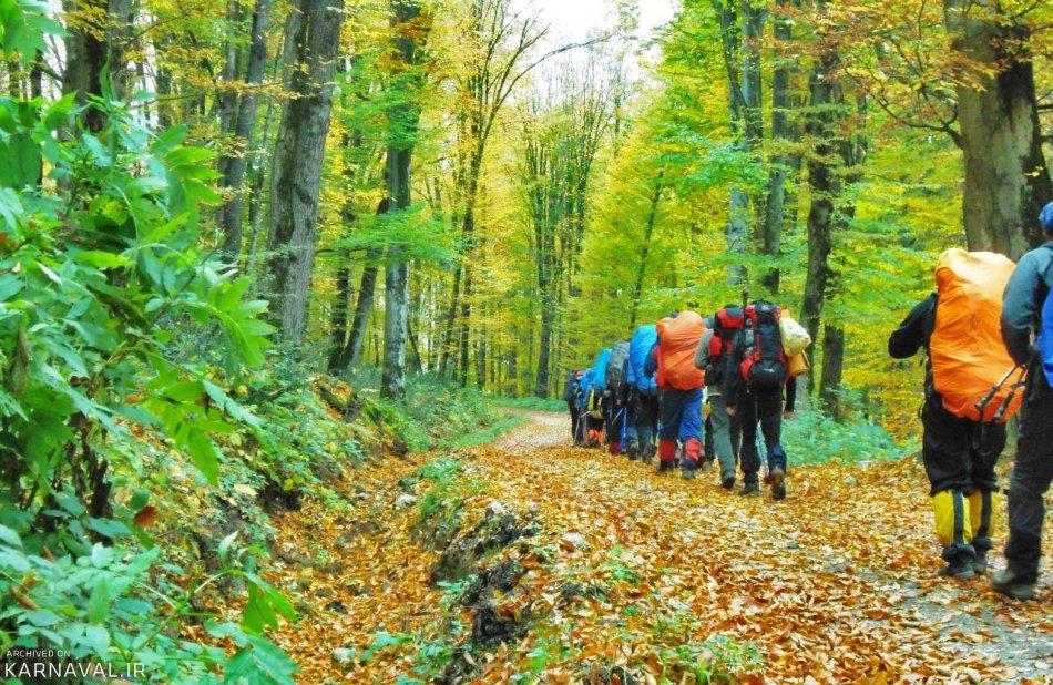 Image result for جنگل راش سوادکوه