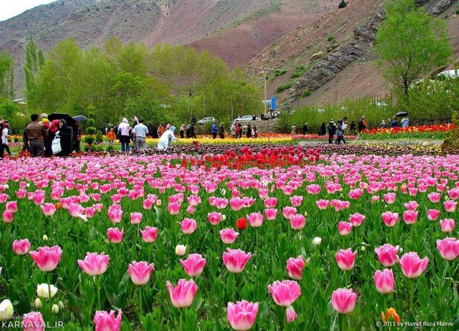 افتتاح بیست و یکمین جشنواره لاله های گچسر